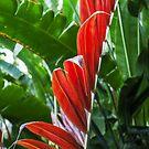 Red Leaf by Armando Martinez