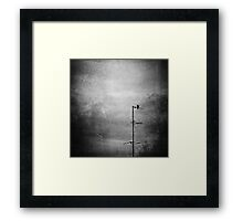 Black dove Framed Print