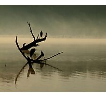 Birds in the mist Photographic Print
