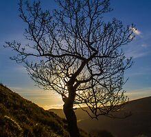 The Lonley Tree by ChrisChallenger