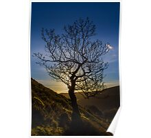 The Lonley Tree Poster