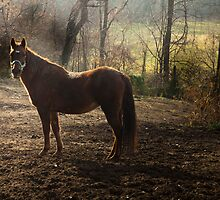 equine photo by pattipics