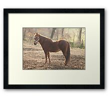 horse outstanding in his field Framed Print