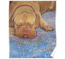 Bordeaux Dog Poster