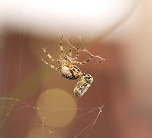 Hanging by a Thread by Michael Gray