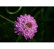 Purple Chaos Photographic Print