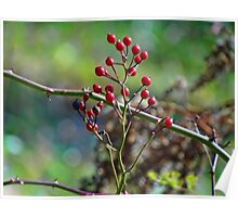 Nature's Christmas colors Poster
