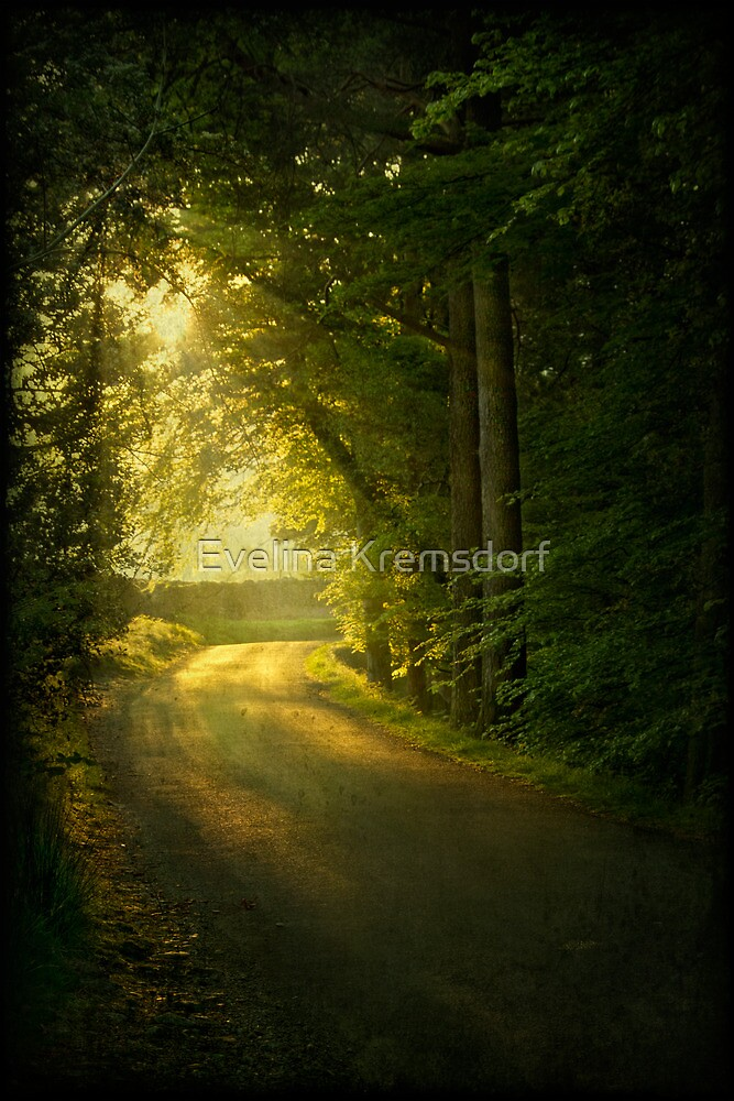 A Path To The Light by Evelina Kremsdorf