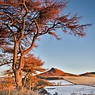 Roseberry Topping in winter light by Phillip Dove