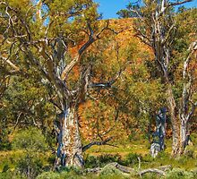Old Eucalypts by Bette Devine