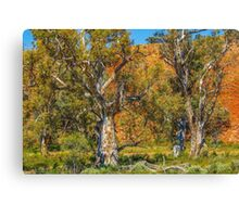 Old Eucalypts Canvas Print