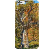 Old Eucalypts iPhone Case/Skin