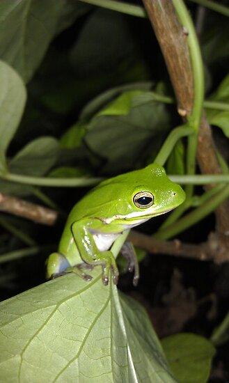 tree frog 2 by sparkleshine