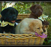 Three in a Basket! by DennisThornton