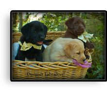 Three in a Basket! Canvas Print