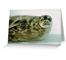Crabeater Seal, Ross Sea, Antarctica Greeting Card