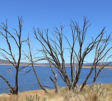 Lake Eucumbene by eucumbene