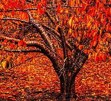 Red Autumn by Bette Devine
