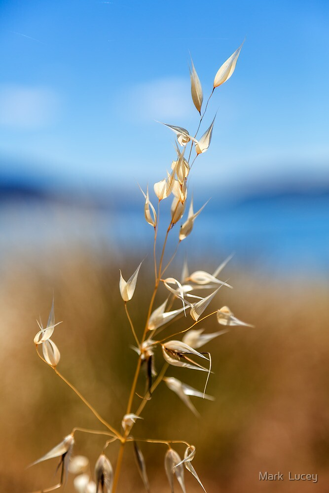Pod by the Lake by Mark  Lucey