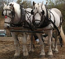 Draft Horses by Liesl Gaesser