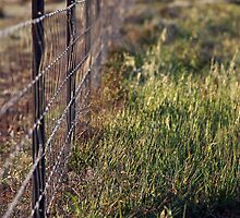 Hay Plain by Timothy John Keegan