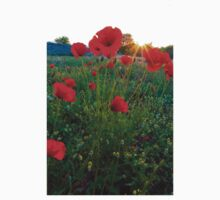 Poppies by yellowfield