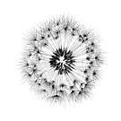 Dandelion by AirDrawn