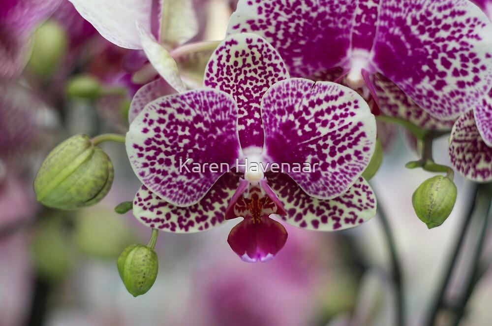 Orchid by Karen Havenaar