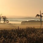 foggy dawn view in the paddocks by gaylene