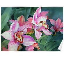 Cymbidium Orchid Poster