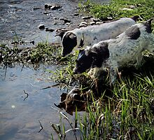 River Dogs by Simon Harris