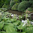 Hosta in a Zen Garden #7 -  by PB-SecretGarden