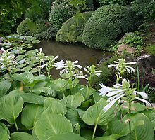 Hosta in a Zen Garden #7 -  by PB-SecretGarden