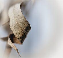 Curled Elegance... (square) by Bob Daalder
