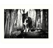 Forest Dog Art Print