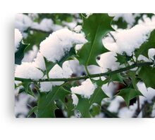 Snow covered holly Canvas Print