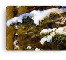 Snow covered fir! Canvas Print