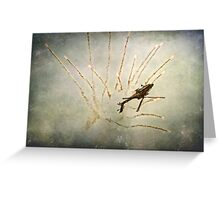 Apache Flares Greeting Card