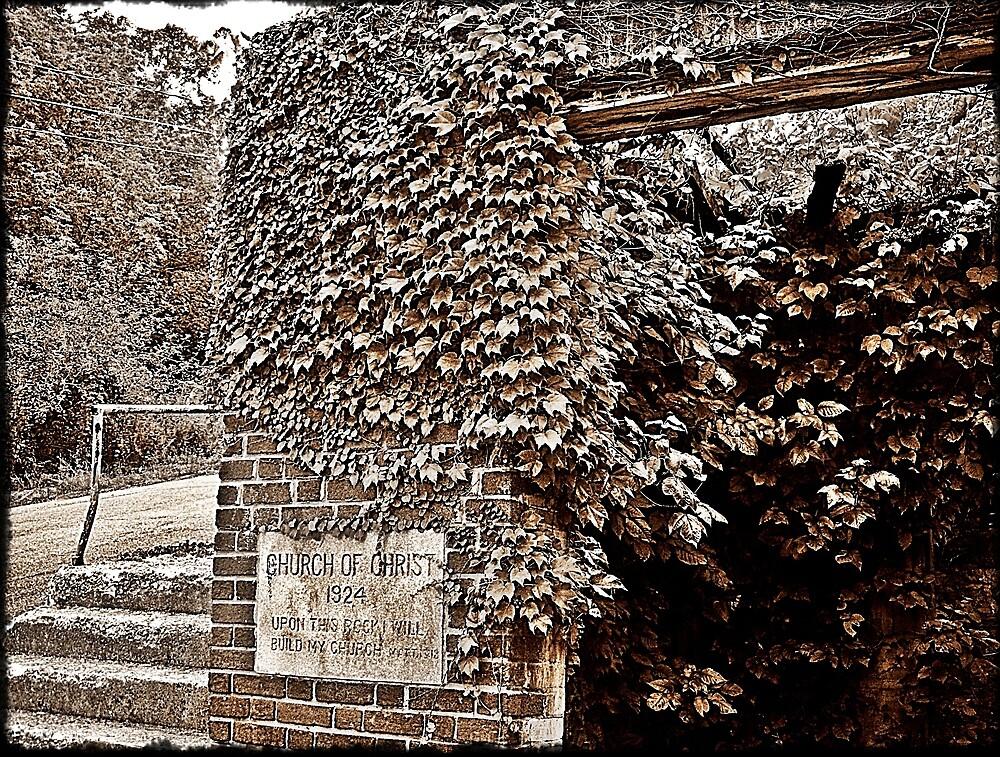 Vines Engulf Rocks by Paul Lubaczewski