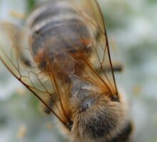 Bay-bee Sticker