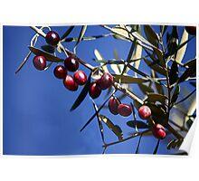 Black olives Poster