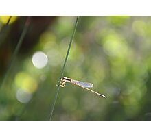 knotted rush Photographic Print