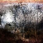 Winter Trees 2 by Dianne Phelps