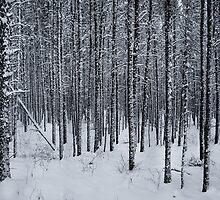 Winter by RobertCharles