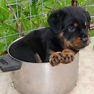 Puppy Rottweiler Curled Up In Food Bowl by taiche