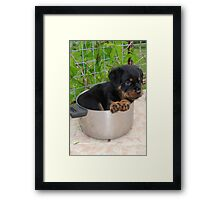 Puppy Rottweiler Curled Up In Food Bowl Framed Print