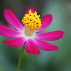 PInk Flower by Kelvin779