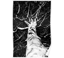 Winter Branches Poster
