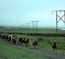 Wild Horses by stevenajbeijer