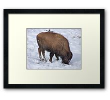 Survival ! Framed Print
